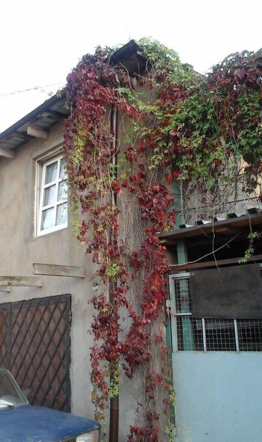 Аренда дома Пушкино, Ключевская улица, цена 24000 рублей, 2020 год объявление №1136547 на megabaz.ru
