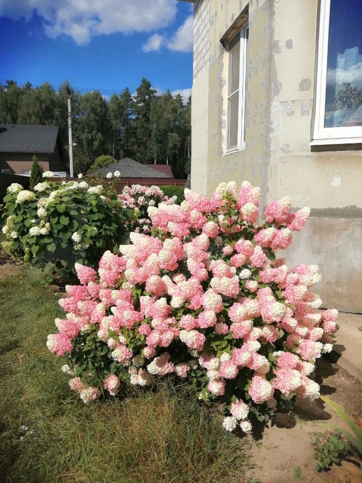 Продажа дома деревня Кабаново, цена 11000000 рублей, 2020 год объявление №407996 на megabaz.ru