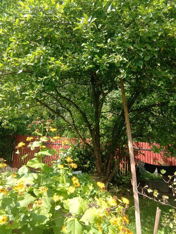 Продажа дома село Новопетровское, Советская улица, цена 1950000 рублей, 2021 год объявление №527889 на megabaz.ru