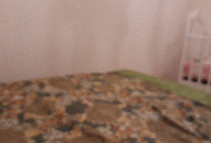 Аренда комнаты Москва, метро Петровско-Разумовская, Дмитровское шоссе 41к2, цена 5000 рублей, 2021 год объявление №1216732 на megabaz.ru