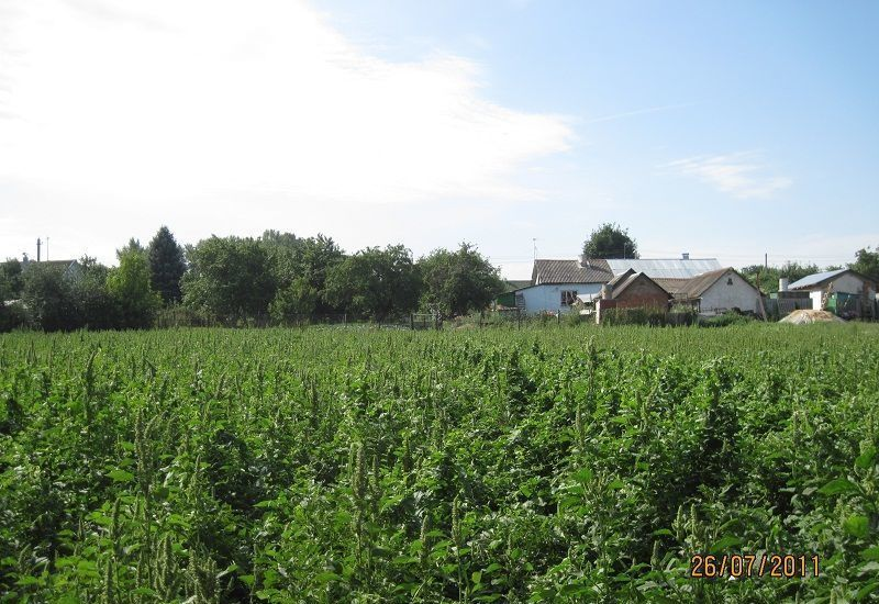Продажа дома деревня Тарасково, улица Дубки 4, цена 2500000 рублей, 2021 год объявление №379692 на megabaz.ru