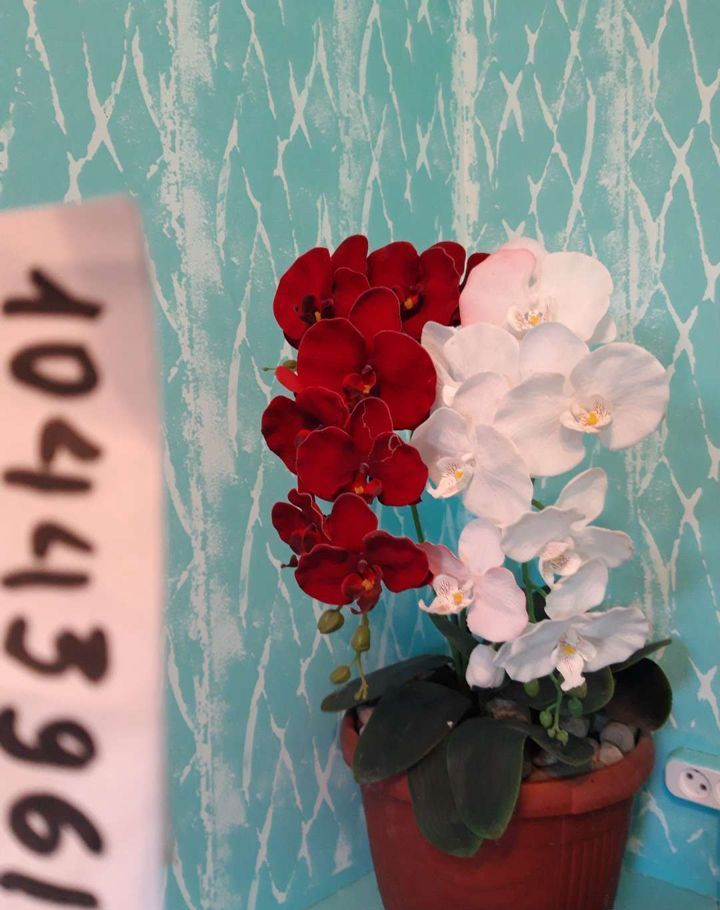 Аренда двухкомнатной квартиры деревня Крюково, Сельская улица 7, цена 2000 рублей, 2021 год объявление №1234093 на megabaz.ru