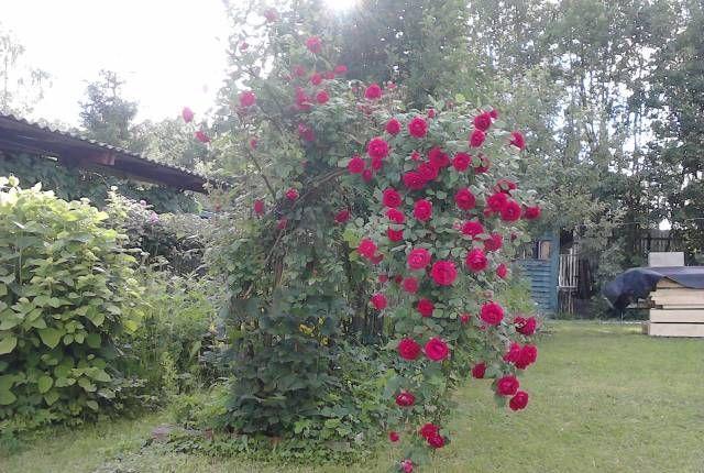 Продажа дома садовое товарищество Москва, цена 3499000 рублей, 2021 год объявление №417108 на megabaz.ru