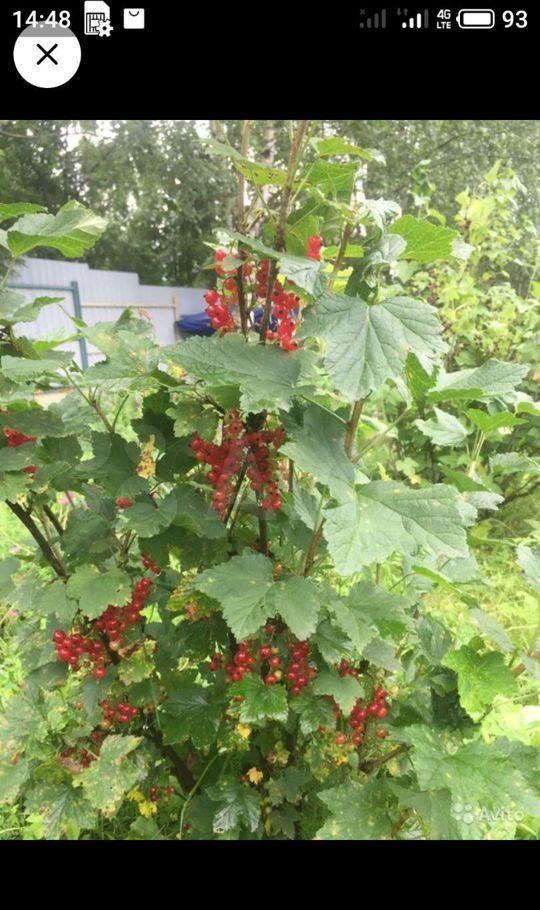 Аренда дома садовое товарищество Топаз, цена 65000 рублей, 2021 год объявление №1386907 на megabaz.ru