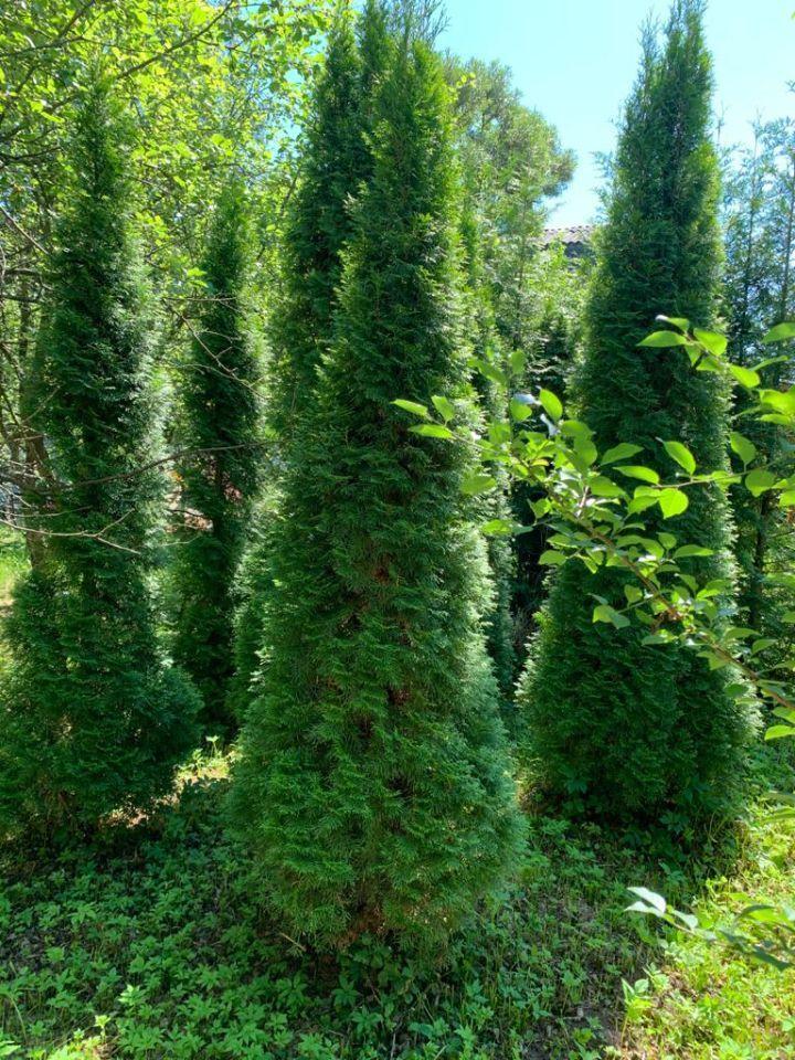 Продажа дома садовое некоммерческое товарищество Алешинские Сады, 17-я улица 1487, цена 2300000 рублей, 2021 год объявление №653303 на megabaz.ru