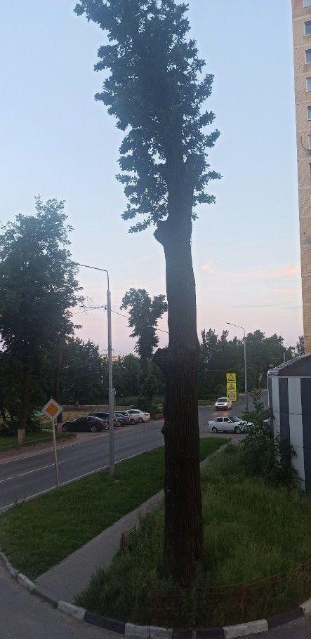 Аренда студии деревня Павлино, цена 20000 рублей, 2020 год объявление №1095288 на megabaz.ru